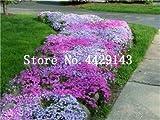 Generic Fresh 100 pcs semillas de flores ROCK CRESS para plantar Mixed 3