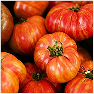 Best boxcar willie tomato Reviews