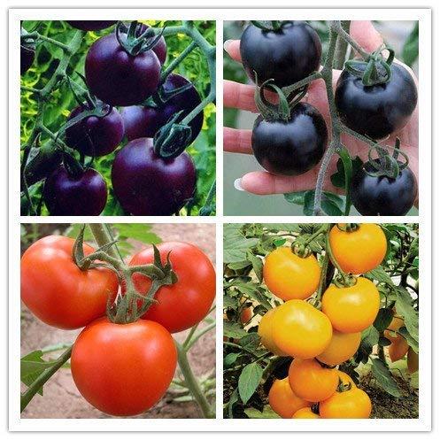 PRODUITS HOO - Mélanger les couleurs végétales Jardin & Home Graines de tomate Graines de Purple Bleu Facile graines plantation agriculture Tomates Marque Nouveau!