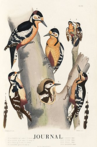 Journal: Woodpecker Vintage Bird Prints - Scientific Illustration   120 Blank Lined 6x9 College Ruled Pages   Journal, Notebook, Diary, Composition ... - Designer Notebooks and Journals, Band 2)