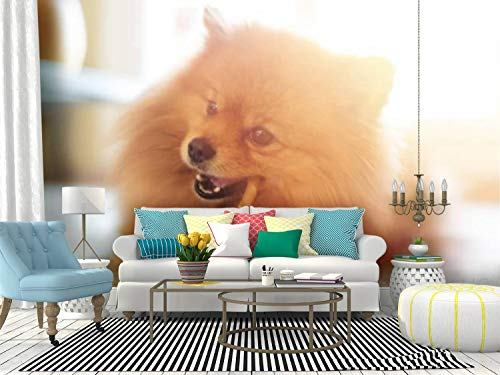 Wall Mural cute pomeranian dog chewing a rawhide chew stick a happy day stock Peel and Stick Wallpaper Self Adhesive Wallpaper Large Wall Sticker Removable Vinyl Film Roll Shelf Paper Home Decor