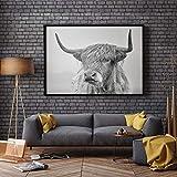 KWzEQ Imprimir en Lienzo Póster e imágenes de la Pared de Scottish Highland Cattle para la Sala de Estar,50x70cm,Pintura sin Marco