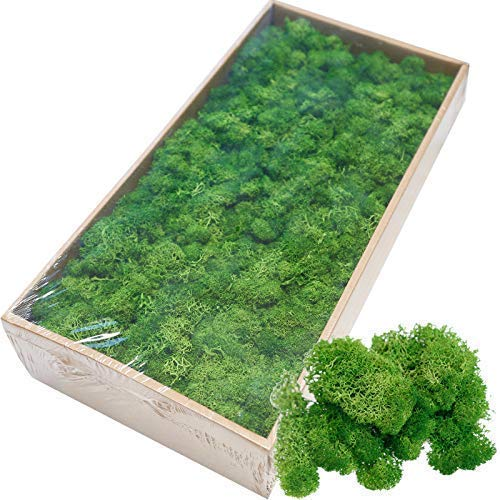 Cratone Artificial Grass Green Artificial Moss Mockups Green Moss Mix Preserved for Wedding Wall Decoration 500g