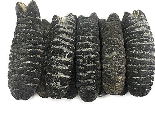China Good Food Dried Seafood Dried Australia Sea Cucumber 澳洲禿參 Free Worldwide AIRMAIL