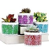 SE SUN-E Mosaik Glas Zement Sukkulenten Kaktus Pflanzer, kleine Pflanzen/Blumentöpfe Pflanzer Perfekte Geschenkidee für Garten, Terrasse, Party, Zuhause, Outdoor/Indoor Dekorationen