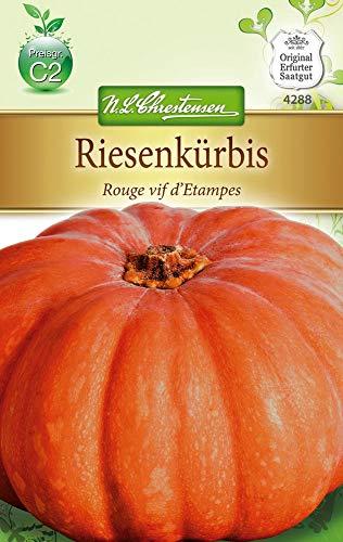 N.L. Chrestensen 4288 Riesenkürbis Rouge vif d'Etampes (Riesenkürbissamen)