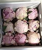 Flores Frescas Online Peonias Preservadas Medianas Rosa 9 Unidades Portes Gratis