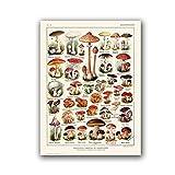 Cuadro de Setas Póster Vintage BotánicoImpresión Micología Arte de Pared Lienzo Pintura Cuadros Casa de Campo Decoración de Cocina Sin Marco 24'x32 (60x80cm)