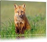 Pixxprint Kleiner Fuchs Format: 120x80 auf Leinwand, XXL