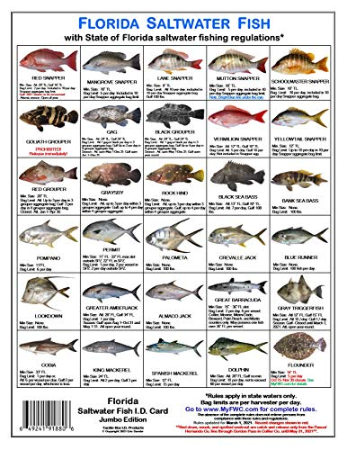 Florida Saltwater Fish Identification Card Set - Three Waterproof Cards Showing 60 Common Fish and 17 Sharks in True-to-Life Photographs with Current FWC rules and Additional Important Information