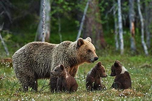 YOFUHOME Korsstygnskit söt brun björn mamma och björn barn gör-det-själv 11 karat broderi hantverk nålpunktsmönster flerfärgad för startpaket heminredning (förstämplade satser) 40 × 50 cm