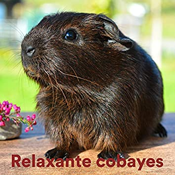 Relaxante Cobayes