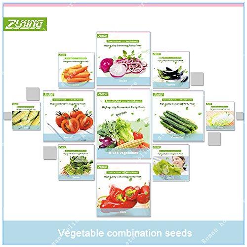 ZLKING 1000 Pcs Mixed Légumes bio Graines Bonsai en santé sécurité biologique Graines de plantes pour la cuisine Ferme jardin Plantation