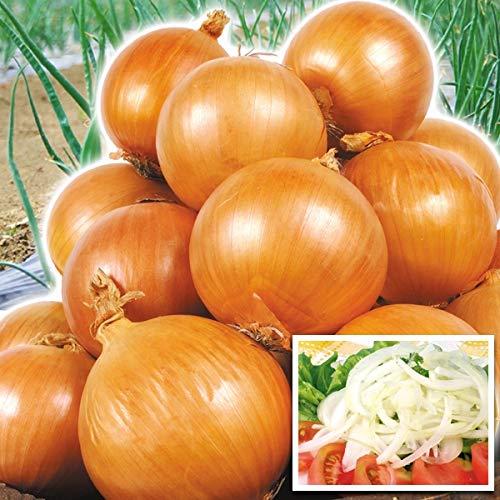国華園 淡路島産 たまねぎ 10�s 1組 野菜