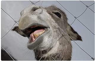 Tree26 Indoor Floor Rug/Mat (23.6 x 15.7 Inch) - Donkey Animals Nature Mouth Teeth Funny Fence