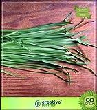 pinkdose erbe piante per coltivare - aglio erba cipollina seme semi