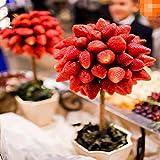 FastDirect Semillas de Fresas Rojas Frutales Ecologicas Bonsai 100 PCS Semillas de Frutas para Huerto, Jardin, Balcon Interior
