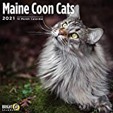 Cal 2021- Maine Coon Cats Wall