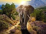 GZSXJL Adult Puzzles 1000 Piezas - Rompecabezas de Elefantes de Colores - Hermoso Animal para Adultos y niños - Lo Mejor para Juegos Familiares Rompecabezas de Madera