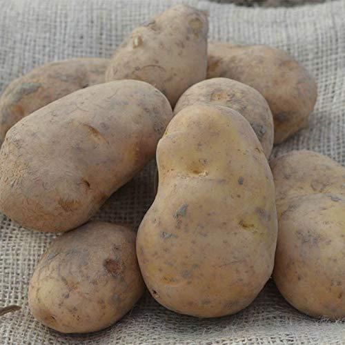 Kartoffel Bintje (Speisekartoffeln) - 20kg - Kartoffel zum Kochen, kann aber auch für Pommes verwendet werden
