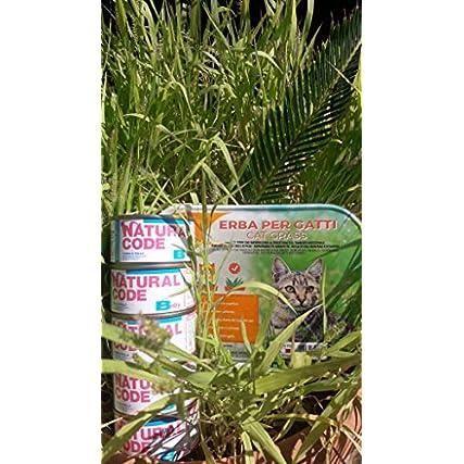 12 scatolette Natural Code Baby Pollo Tonno, Cibo Umido per Gattini Kitten da 85 gr Naturale Senza glutine Senza Cereali + Erba per Gatti Erba Gatta a germinazione Rapida in vaschetta da 100g