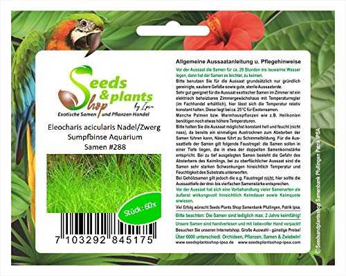 Stk - 60x Eleocharis acicularis Nadel Zwerg Sumpfbinse Pflanzen - Samen #288 - Seeds Plants Shop Samenbank Pfullingen Patrik Ipsa