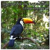Sonidos de la Naturaleza: Selva Tropical