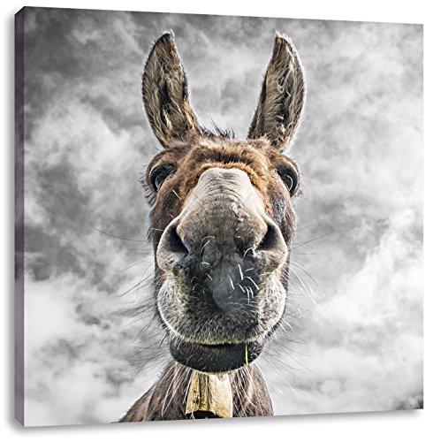 Lustiger Esel B&W Detail, Format: 60x60 auf Leinwand, XXL riesige Bilder fertig gerahmt mit Keilrahmen, Kunstdruck auf Wandbild mit Rahmen, günstiger als Gemälde oder Ölbild, kein Poster oder Plakat