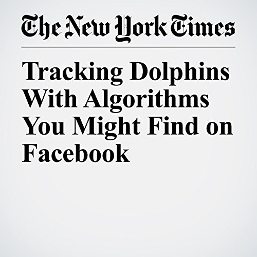 Tracking Dolphins With Algorithms You Might Find on Facebook copertina