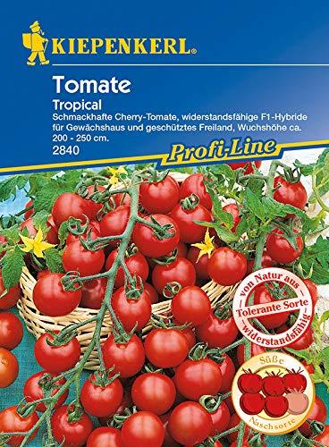 Tomaten, 'Sacher' Schokoladentomate
