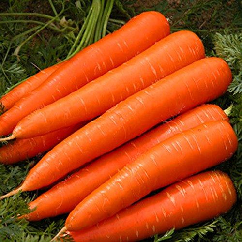 DaDago 200 Teile/Beutel Organische Karottensamen Gartentopf Nutritive Frischgemüsepflanzen Samen