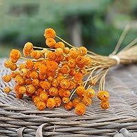 LIZANAN 家の装飾 ホームリビングルームガーデン装飾用50pcsのナチュラルアートドライフラワーアレンジメントの写真の小道具の花DIY永遠の人工花 花 (Color : Orange)