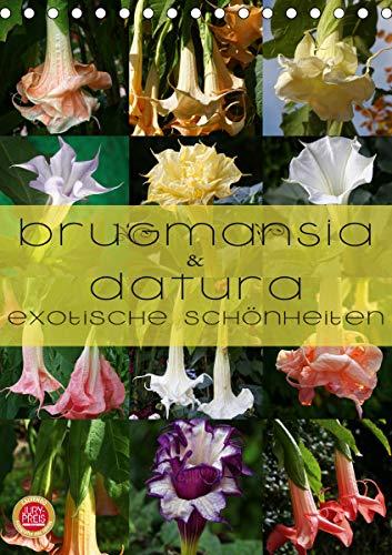 Brugmansia & Datura - Exotische Schönheiten (Tischkalender 2021 DIN A5 hoch)