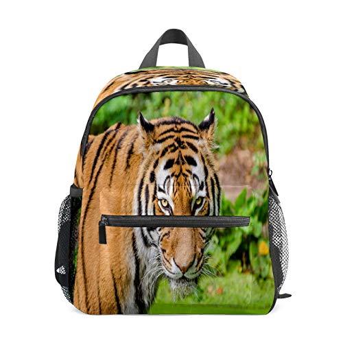 Mochila infantil para niños de 1 a 6 años de edad, mochila perfecta para niños y niñas de jardín de infancia, gato, tigre violento