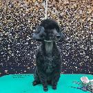 """Приют для собак """"ДОРА"""" 🐕 (@priyt_dora_vrn) • Instagram-Fotos und -Videos"""