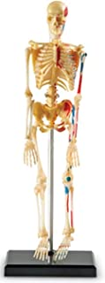 Learning Resources LER3337 Skeleton Model 9.2 inches tall