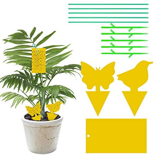 YHmall Frucht Fliegenfalle Fliegenfänger Gelbsticker Gelbtafeln Leimfallen zum Schutz vor Trauermücken Obstfliegen MEHRWEG (30 Stück)