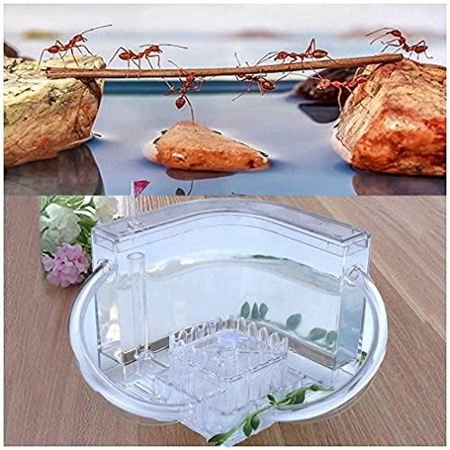 WSVULLD Bricolaje Sistema de alimentación de Granja de Hormigas, hormigón de acrílico Transparente, fácil de Instalar, Nido de Insectos, Juguete Educativo de Ciencia, Regalo, Blanco