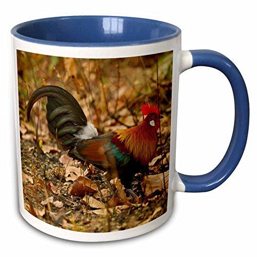 3dRose Kanha kammhühner bird-as10jmc0007-joe und Mary Ann McDonald-Two Ton Blau Becher, Keramik, rot, 10,2x 7,62x 9,52cm