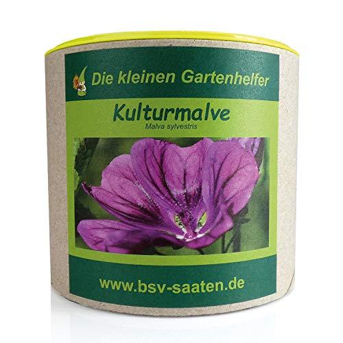 Keimsamen Kulturmalve 80g I Samen zur Bodenverbesserung I Ideale Insektenweide mit violetten Blüten I Saatgut Sylva Kultur-Malve für 80 m²
