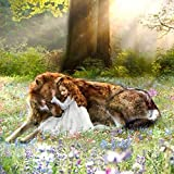 Paint by Number Wolf and Girl Canvas Oil Painting Kit for Kids & Adults,Drawing Paintwork with Paintbrushes 40x50cm