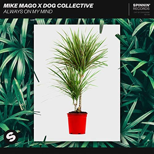 Mike Mago & Dog Collective