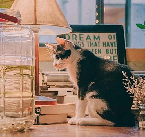 DIY Digital-Malerei Malset – Katze schwarz und weiß sitzend neben einem Getränkespender aus transparentem Glas