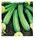 Semi Zucchino Genovese - Cucurbita Pepo - Semi agricoli - Zucchine - 65 Sementi Circa
