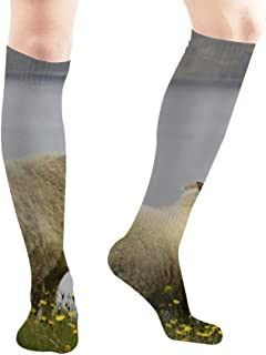 Wild White Icelandic Sheep Animals Wildlife Agriculture Parks Outdoor Compression Socks Unisex Printed Socks Fun Long Cotton Socks Over The Calf Tube 19.7 Inch