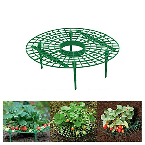 Surenhap Aardbeienplant ondersteuning onderstel plant klimplant