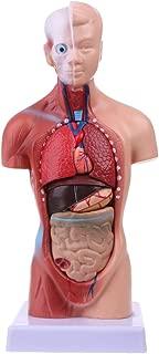 YOUSIKE Human Torso Body Model, Anatomy Anatomical Internal Organs for Teaching