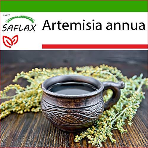 SAFLAX - Heilpflanzen - Chinesischer Beifuß - 250 Samen - Mit keimfreiem Anzuchtsubstrat - Artemisia annua