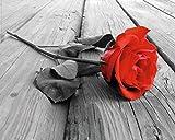 1art1 Rosen - Rote Rose Auf Holz, 1-Teilig Mini-Poster 50 x