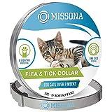 Hills TD Feline t/d. PD - Prescription Diet dietas para gatos